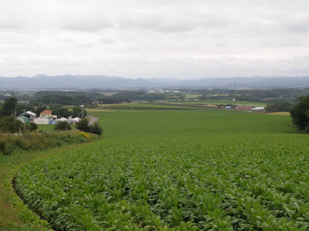 札幌近郊で農業を営む男性との出会いのチャンス!交流会参加女性を大募集!